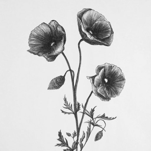 cropped-papaver-lithograph-20181.jpg