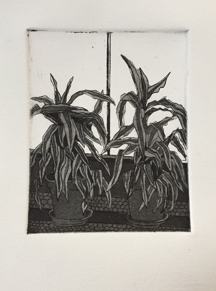 Two Plants - Etching 2019